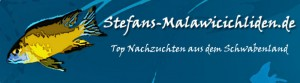 Malawicichliden-banner